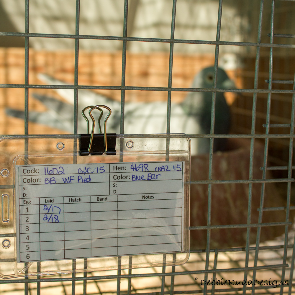 Pigeon Record Cards